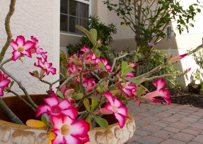 landscaping-fort-myers12