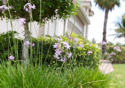 landscaping-fort-myers22