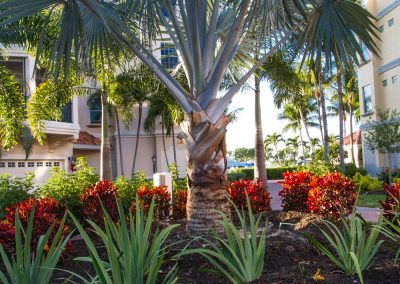 landscaping-fort-myers28