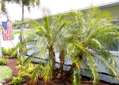 landscaping-fort-myers36